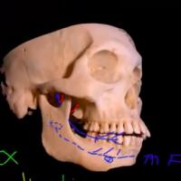 Marcs Anatomy