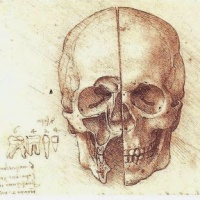 Clinical Anatomy Explained!