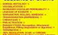 Zapalenie - patomorfologia - część 2a